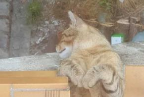 Disappearance alert Cat Male , 2 years Pagny-sur-Meuse France
