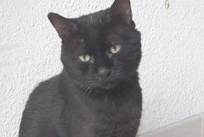 Discovery alert Cat miscegenation Male Nîmes France