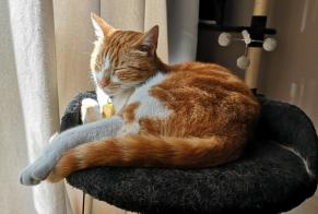 Disappearance alert Cat Male , 2 years Noisy-le-Sec France