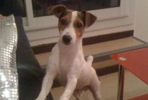 Disappearance alert Dog  Male , 11 years Marseille 11e Arrondissement France
