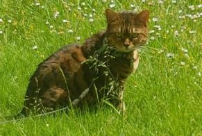 Disappearance alert Cat  Female , 4 years Carcassonne France