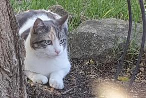 Disappearance alert Cat Female , 1 years Carpentras France