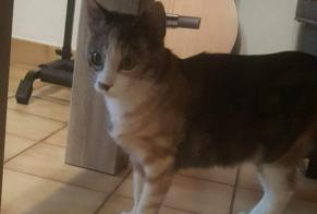 Discovery alert Cat Female Piolenc France