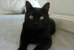 Disappearance alert Cat Male , 5 years Carpentras France