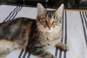 Disappearance alert Cat miscegenation Female , 0 years Adissan France
