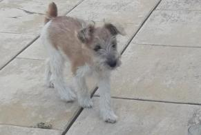 Disappearance alert Dog  Female , 0 years Azille France