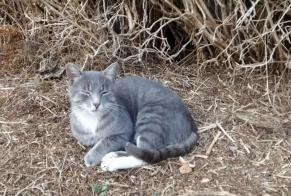 Discovery alert Cat Male Aiffres France