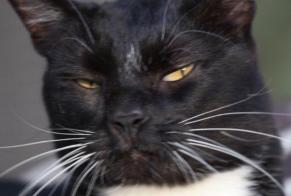 Disappearance alert Cat Male , 12 years Éguilles France