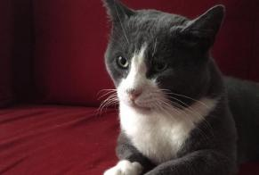 Disappearance alert Cat  Male , 5 years Saint-Ouen France