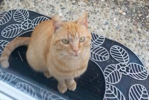 Discovery alert Cat Male Astaffort France