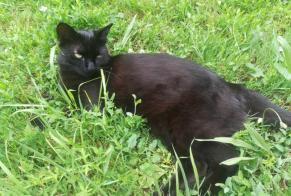 Disappearance alert Cat Female , 2 years Magné France