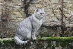 Disappearance alert Cat  Male , 2 years Dhuizon France