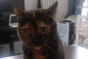 Disappearance alert Cat Female , 14 years Villemomble France