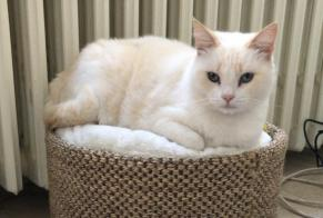 Disappearance alert Cat miscegenation Female , 5 years Antony France