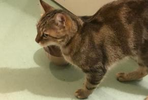 Discovery alert Cat Female Talence France
