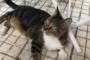 Discovery alert Cat Unknown Ajaccio France