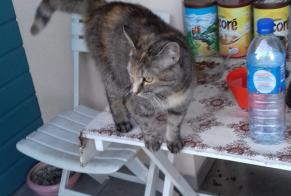 Disappearance alert Cat miscegenation Female , 5 years Le Passage France