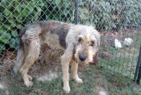 Discovery alert Dog  Male Saint-Aignan France