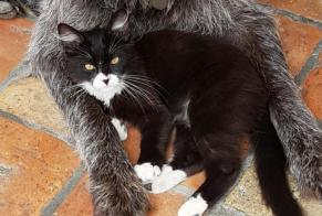 Disappearance alert Cat miscegenation Male , 0 years Courbiac France