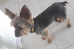 Discovery alert Dog  Male Bourges France