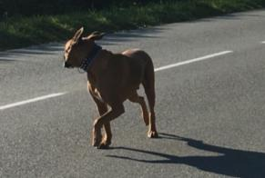 Discovery alert Dog  Unknown Morbecque France