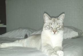 Disappearance alert Cat miscegenation Female , 1 years Annecy France