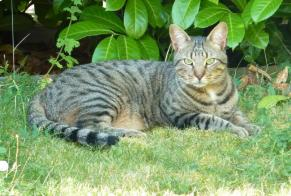 Disappearance alert Cat  Male , 6 years Saint-Apollinaire France