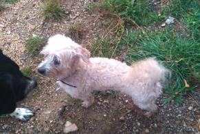 Discovery alert Dog Male Leyme France