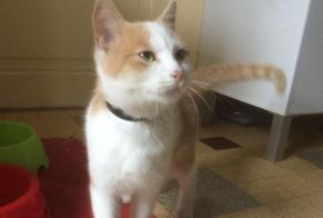 Discovery alert Cat miscegenation Male Seigy France