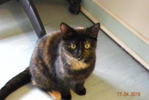 Disappearance alert Cat miscegenation Female , 4 years Courmemin France