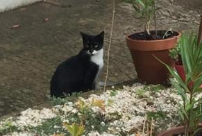 Discovery alert Cat Female Poitiers France