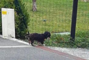 Discovery alert Dog Unknown Saint-Quentin-sur-le-Homme France