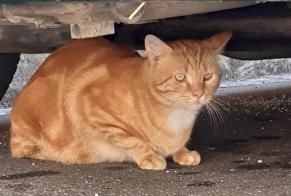 Discovery alert Cat Male Seurre France