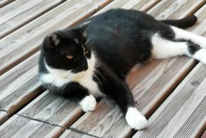 Discovery alert Cat Unknown Ars-sur-Moselle France