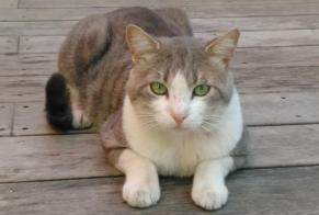 Discovery alert Cat Male , 3 years Châtillon France