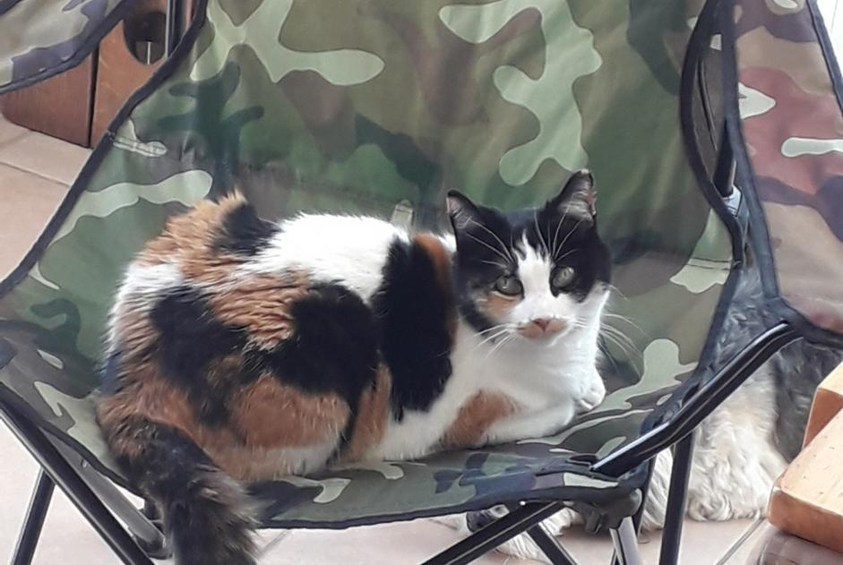 Disappearance alert Cat Female , 13 years Gap France