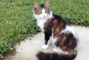 Discovery alert Cat  Male Cherbourg-en-Cotentin France