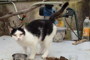 Discovery alert Cat Male Chailly-sur-Armançon France