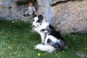 Disappearance alert Dog  Female , 9 years Guillaumes France