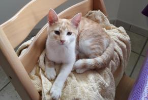 Disappearance alert Cat Female , 0 years Bonchamp-lès-Laval France