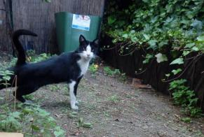 Discovery alert Cat Male Issy-les-Moulineaux France