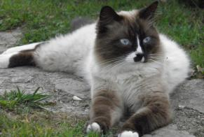 Disappearance alert Cat miscegenation Male , 2 years Jaujac France