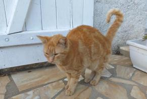 Discovery alert Cat Female Monts France