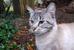Discovery alert Cat miscegenation Male Menskirch France