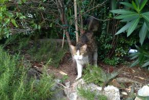 Discovery alert Cat Unknown , 2 years Grasse France