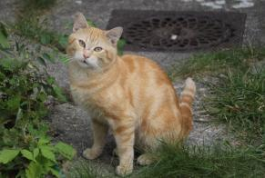 Discovery alert Cat Unknown Boulogne-Billancourt France