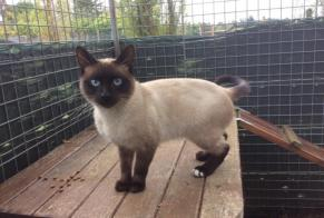 Discovery alert Cat  Male Chauvigny France