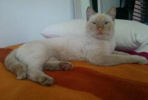 Discovery alert Cat miscegenation Male , 5 years Montpellier France