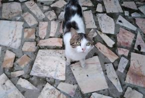 Discovery alert Cat Male Calais France