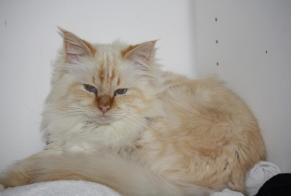 Disappearance alert Cat  Male , 6 years Saint-Just-d'Ardèche France